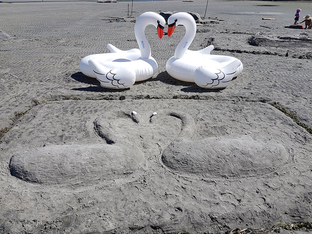 swans-beach-1000